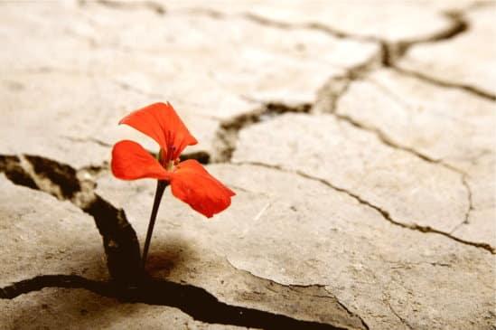 Mit dem Resilienz Training von Lali Viviane Golan erfahren Sie die Kraft der konstruktiven Gelassenheit und finden zu mehr Freude und Stabilität im Leben.